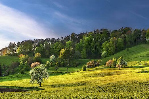 Spring Evening in Neuburg by Manuel Martin