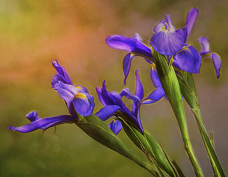Spring Flowers - Dutch Iris  by Mary Lynn Giacomini