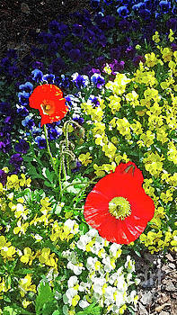 Sharon Williams Eng - Spring Garden Color