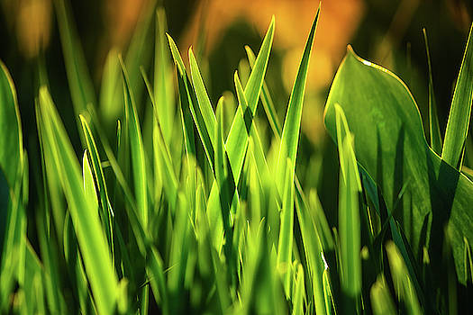 Spring Greens by Greg Booher