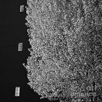 Spring In The City by Patrick M Lynch