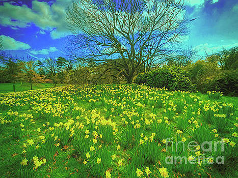 Spring is in the air by Leigh Kemp