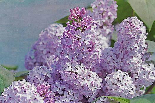 Spring Lilacs by Cindi Ressler