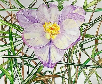 Spring Macro Tangle by Laurel Adams