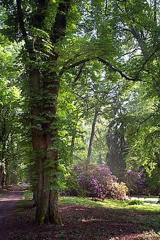 Jenny Rainbow - Spring Marvels. Chestnut Tree