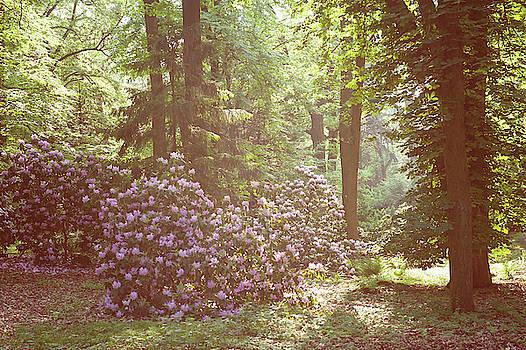 Jenny Rainbow - Spring. Marvels. Hazy Woods