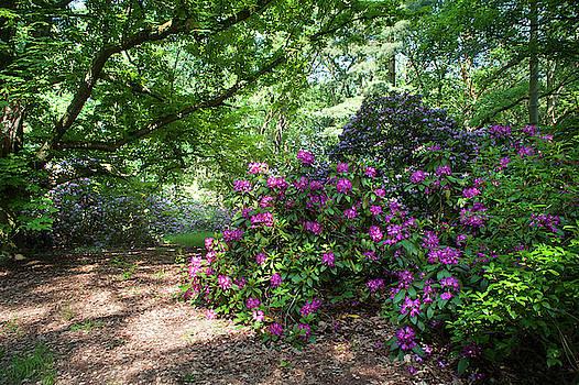 Jenny Rainbow - Spring Marvels. Hidden Beauty 1