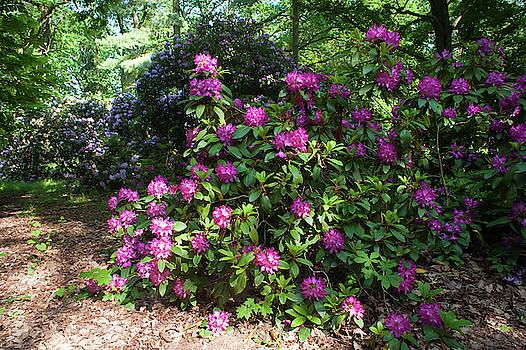 Jenny Rainbow - Spring Marvels. Hidden Beauty