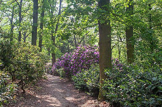 Jenny Rainbow - Spring Marvels. Pleasant Walk