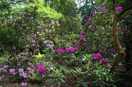 Jenny Rainbow - Spring Marvels. Purple Bloom