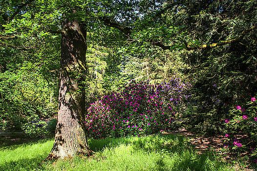 Jenny Rainbow - Spring Marvels. Sunny Day
