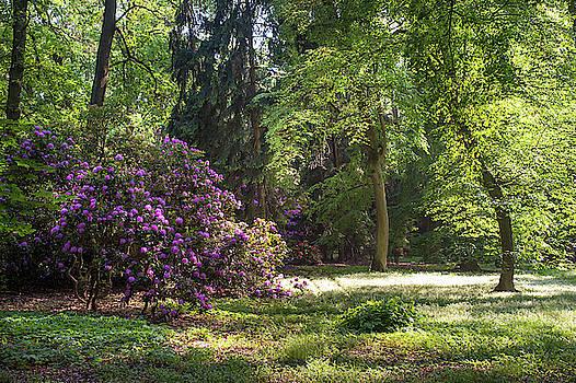Jenny Rainbow - Spring Marvels. Sunshine in Woods