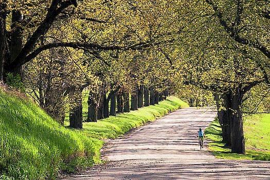 Spring on Darling Hill by Tim Kirchoff