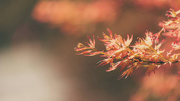 Spring or Fall by Dheeraj Mutha