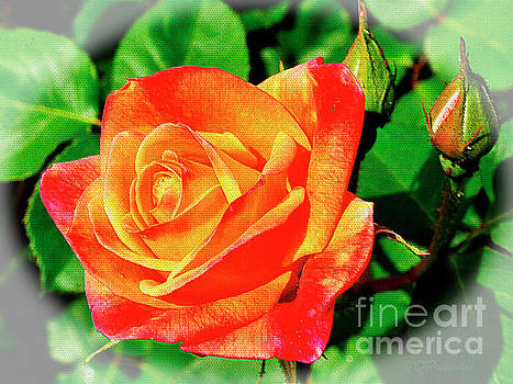 Spring Rose and Buds by Debby Pueschel
