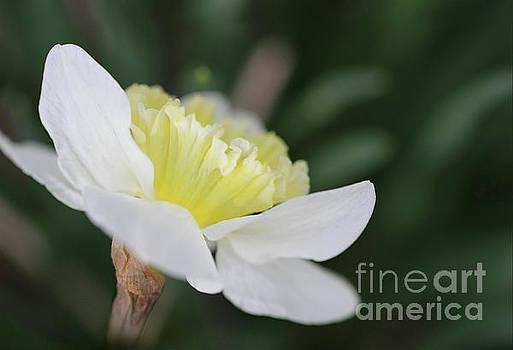 Spring Sing by Karen Adams