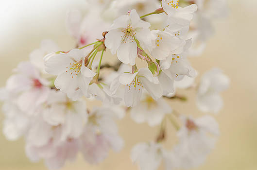 Spring Time Cheer by Donna Collins