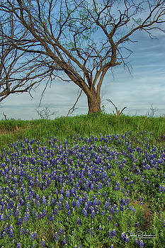 Spring Time in Texas by Debby Richards