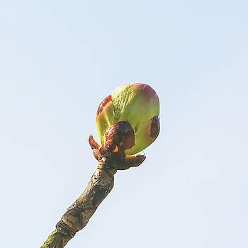 Jacek Wojnarowski - Spring Tree Buds Opening D