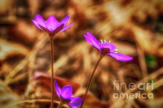 Spring wild flower 3 by Veikko Suikkanen