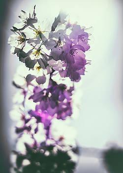 Springtime Bloom by Scott Wyatt