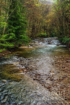 Springtime Gauley River Headwaters by Thomas R Fletcher