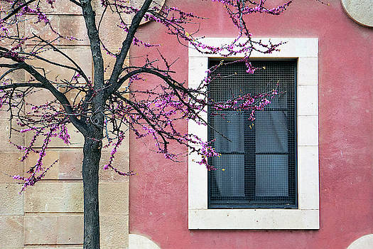 Springtime in Ciutadella - Saludos de la Primavera by Jonny Jelinek