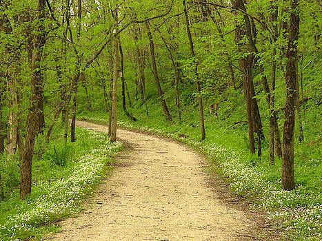 Springtime in the Woods  by Lori Frisch