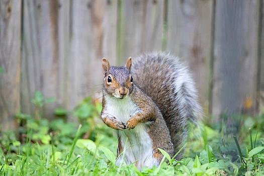Squirrel 2 by David Stasiak