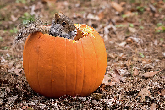 Squirrel In Pumpkin by Terry DeLuco