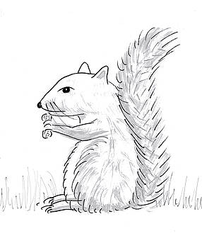 Squirrel sketch by Steve Clarke