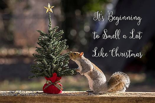 Squirrel Smells Like Christmas  by Terry DeLuco