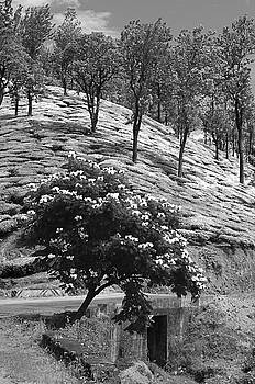 SSK 9214 Enving From The Top. B/W by Sunil Kapadia