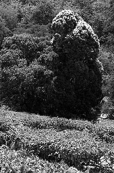 Ssk 9215 Plants And Trees. B/w by Sunil Kapadia