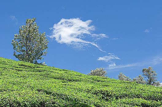 SSK 9217 Towards The Sky. Color by Sunil Kapadia