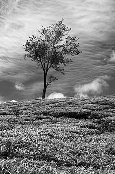 SSK 9220 One Tree Hill. B/W by Sunil Kapadia