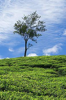 SSK 9220 One Tree Hill. Color by Sunil Kapadia