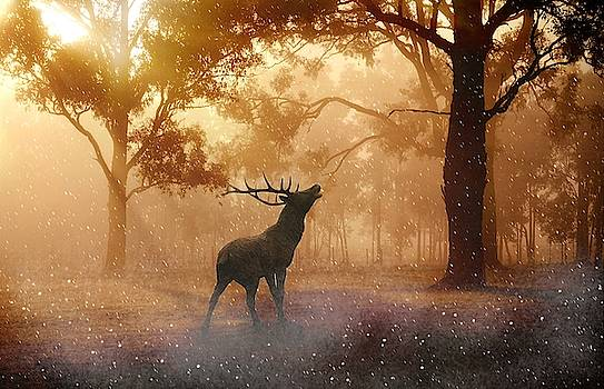 Stag in the forest by Top Wallpapers