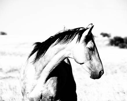 Stallion Breeze by Jody Miller
