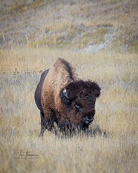 Standing Bull by Jim Thompson