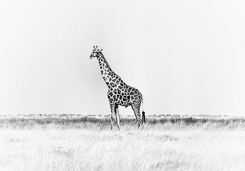 Standing Watch by Rand