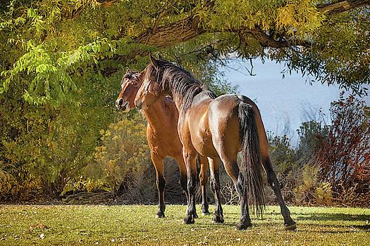 Standoff at Washoe Lake by Janis Knight
