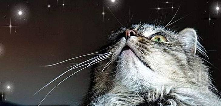 Star Gazing Kitty by Lori Pessin Lafargue