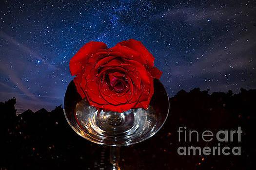 Star Rose by Sherry Little Fawn Schuessler