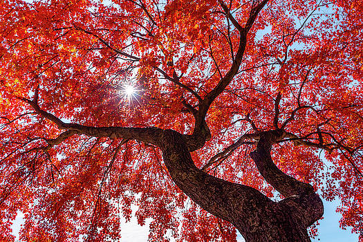 Staring Up At Fall by John Randazzo