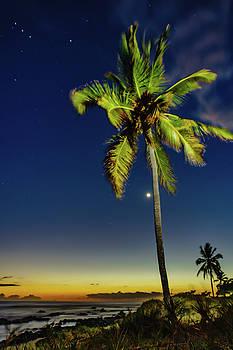 Stars - Palms - Moon -Sea by John Bauer