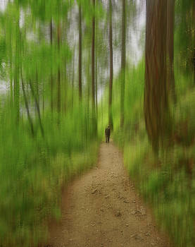 Start walking to find your way by Silvia Marcoschamer