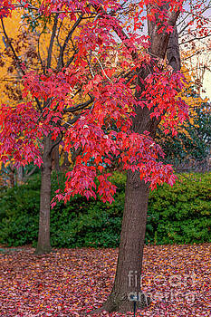 Dale Powell - State Capital Grounds - Autumn Colors