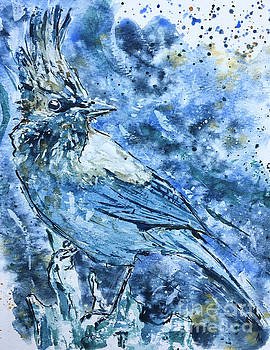 Steller's Jay  by Andrew Marshall