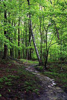 Stone Path with Birch by Tom Romeo